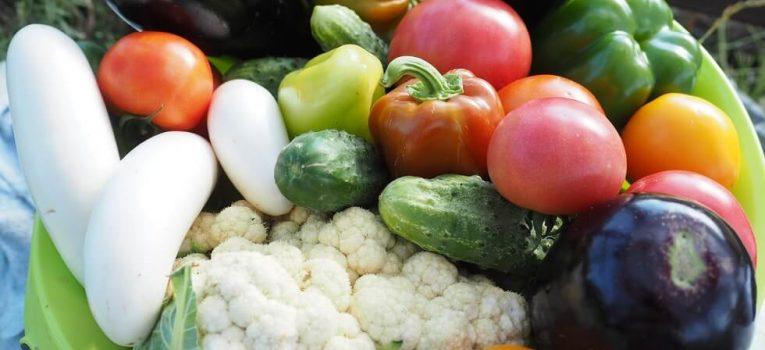 Curso de vegetarianismo: mitos e verdades sobre esse estilo de vida!