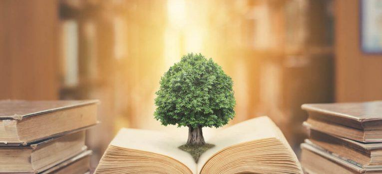 Curso de Direito Ambiental: Plano de Ensino, Duração e Preços