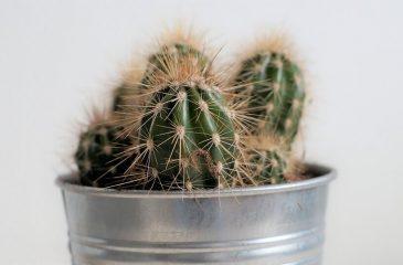 Plantas para apartamento: Veja as melhores espécies e como cuidar!