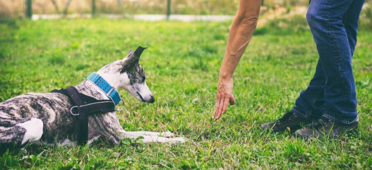 Aprenda mais sobre adestramento de cães e desenvolva com seu pet