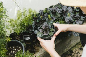 Floricultura: como o curso de jardinagem pode te trazer destaque no meio