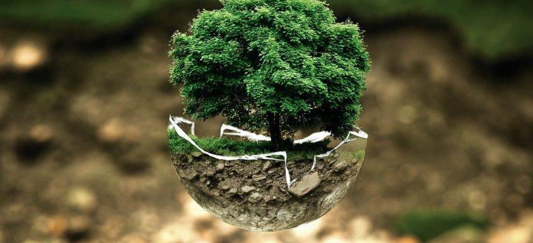 5 práticas para garantir a preservação do meio ambiente